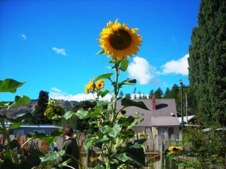 montes-backyard-flowers-web.jpg